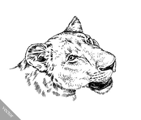 prideful: black and white brush painting ink draw vector isolated lion illustration Stock Photo