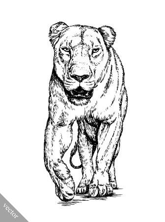 black and white brush painting ink draw vector isolated lion illustration Imagens