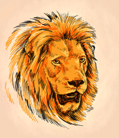prideful: color brush painting ink draw isolated lion illustration Stock Photo