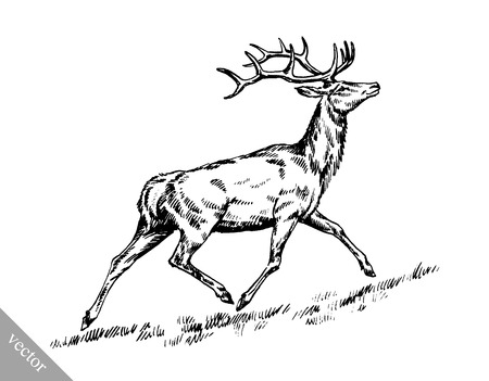 hoofed: black and white brush painting vector ink draw isolated deer illustration