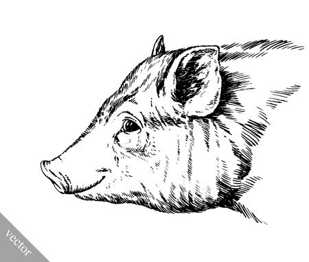 hoofed: black and white brush painting ink vector draw isolated pig illustration