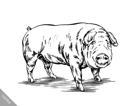 black and white brush painting ink vector draw isolated pig illustration Imagens - 50051198