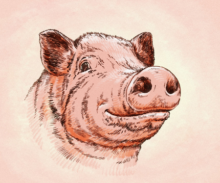 color brush painting ink draw isolated pig illustration