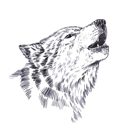 wolves: black and white engrave ink draw isolated wolf Stock Photo