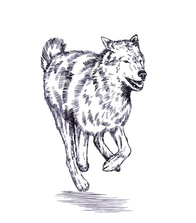 artful: black and white engrave ink draw isolated wolf Stock Photo