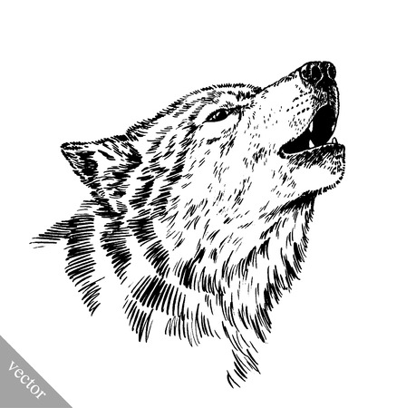 dessin noir et blanc: vecteur graver encre noir et blanc dessiner loup isolé