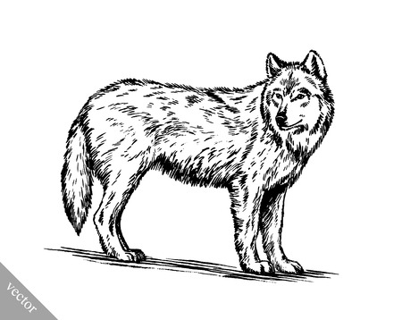 artful: black and white vector engrave ink draw isolated wolf