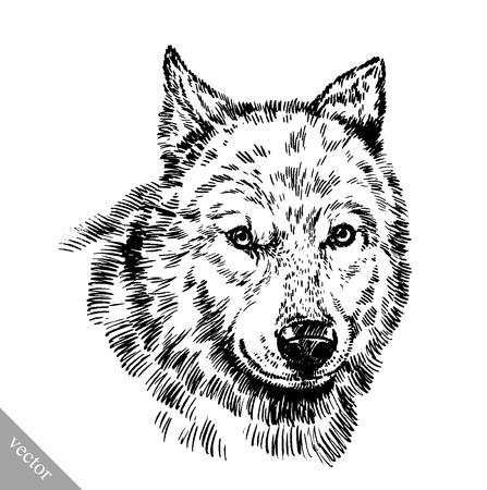 vecteur graver encre noir et blanc dessiner loup isolé