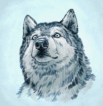 dog pen: color engrave ink draw isolated wolf illustration Stock Photo
