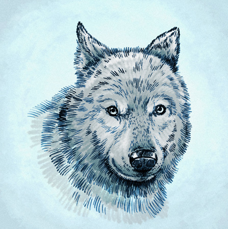 artful: color engrave ink draw isolated wolf illustration Stock Photo