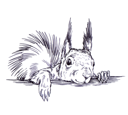 zwart en wit graveren inkt trek geïsoleerde eekhoorn illustratie Stockfoto