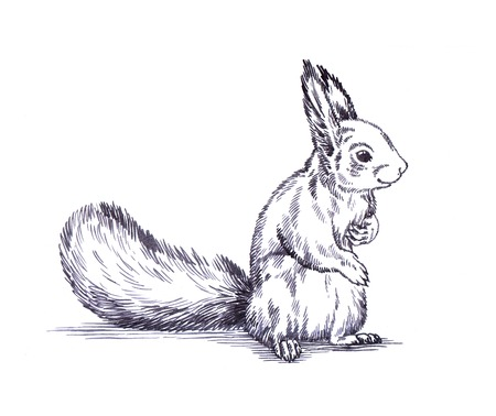 engrave: black and white engrave ink draw isolated squirrel illustration
