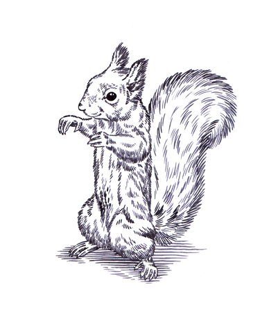 artful: black and white engrave ink draw isolated squirrel illustration