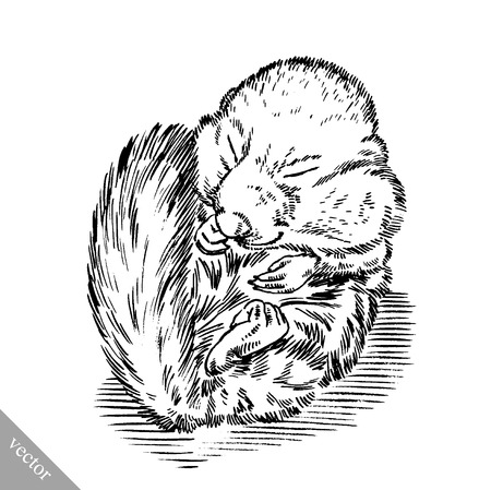 isolated squirrel: black and white engrave ink draw isolated vector squirrel illustration Illustration