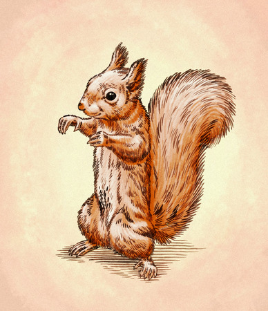 artful: color engrave ink draw isolated squirrel illustration