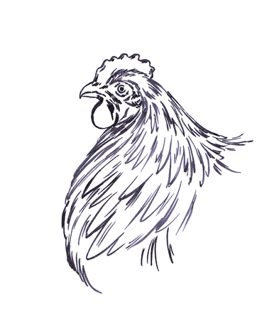 black and white engrave ink draw isolated chicken illustration