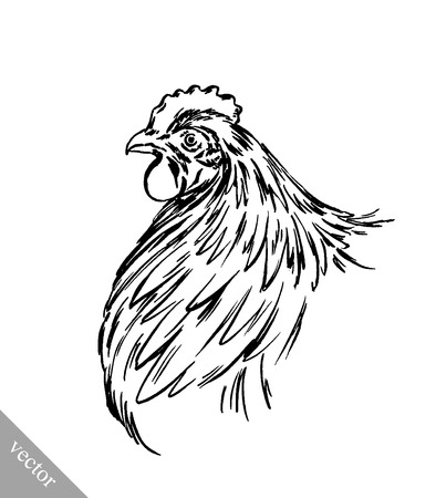 naturalistic: black and white engrave ink draw isolated vector chicken illustration Illustration