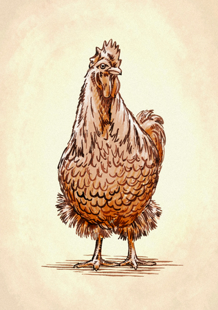 naturalistic: color engrave ink draw isolated chicken illustration
