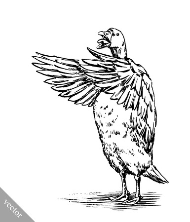 animal farm duck: black and white engrave ink draw vector isolated duck illustration Illustration