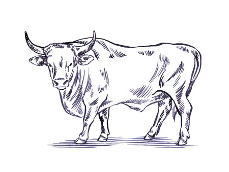 black and white engrave ink draw cow illustration Banco de Imagens