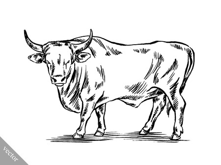 horn: black and white engrave ink draw cow vector illustration