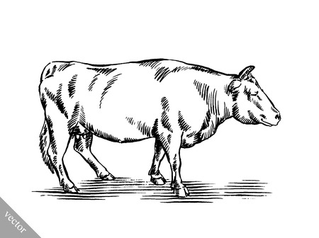 ruminant: black and white engrave ink draw cow vector illustration