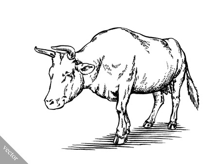 bull pen: black and white engrave ink draw cow vector illustration