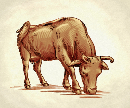 bull pen: color engrave ink hand draw cow illustration
