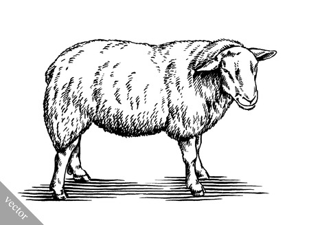 black and white engrave ink draw vector sheep illustration