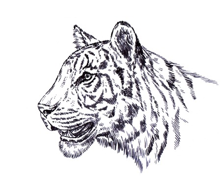 zeichnen: schwarz-weiß Abbildung gravieren Tinte Draw Tiger