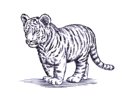 black and white engrave ink draw tiger illustration