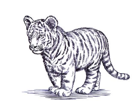 black and white engrave ink draw tiger illustration Imagens - 52342643
