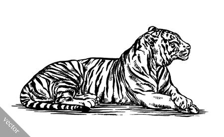 Ejemplo blanco y negro de la tinta de grabado del vector empate tigre