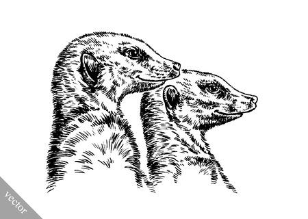 meerkat: black and white engrave ink draw vector meerkat illustration