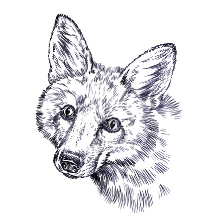 black and white engrave ink draw fox illustration Zdjęcie Seryjne