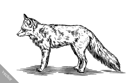 black and white engrave ink vector draw fox illustration Vektoros illusztráció