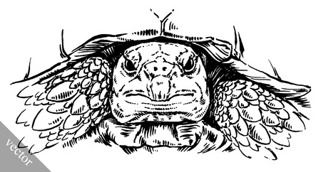 turtle isolated: black and white engrave ink draw vector turtle illustration Illustration