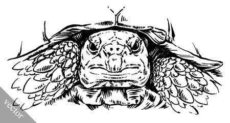 schildkroete: Schwarz-Weiß-Auslosung Vektor gravieren Tinte Schildkröte Illustration