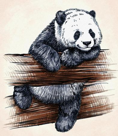 color engrave ink hand draw panda illustration