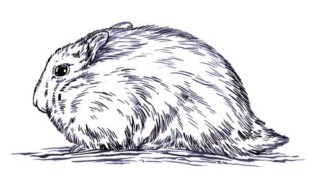 hairy arms: black and white engrave ink draw hamster illustration Stock Photo