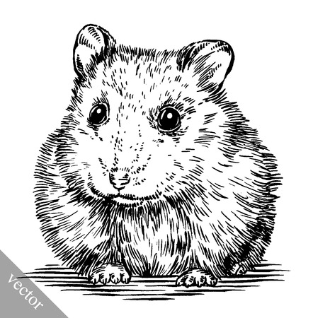 cute hamster: black and white engrave ink draw vector hamster illustration