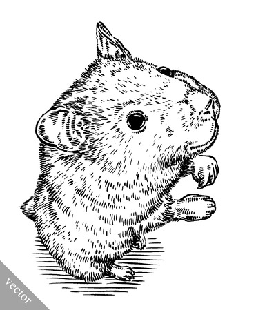 hairy arms: black and white engrave ink draw vector hamster illustration