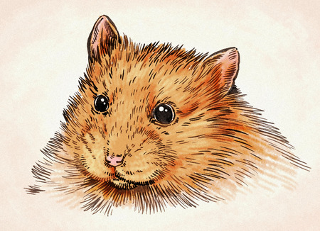 hairy arms: color engrave ink hand draw hamster illustration
