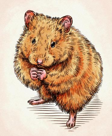cute hamster: color engrave ink hand draw hamster illustration