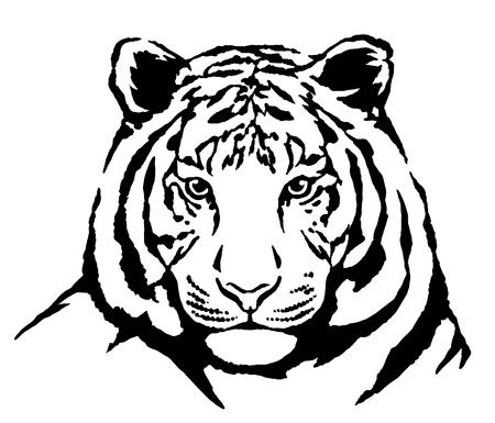 black and white engrave ink draw tiger illustration