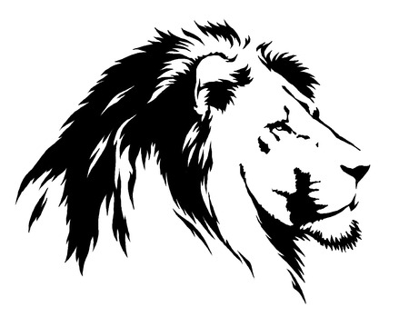draw animal: black and white linear draw lion illustration Stock Photo