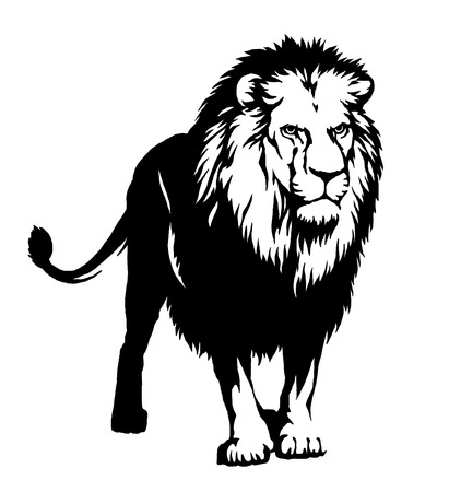 black and white linear draw lion illustration Stock Photo