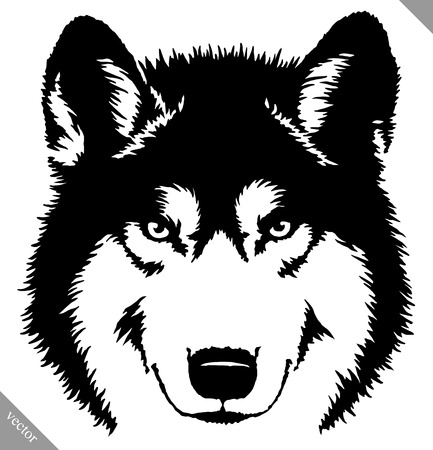 black and white linear paint draw wolf illustration Illustration