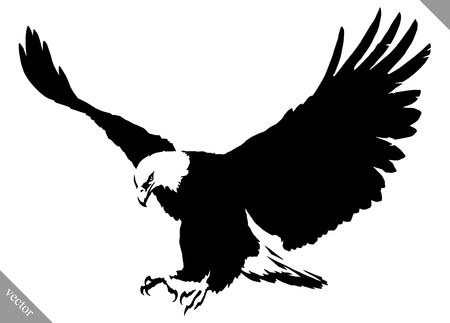black and white linear paint draw eagle bird vector illustration Vettoriali
