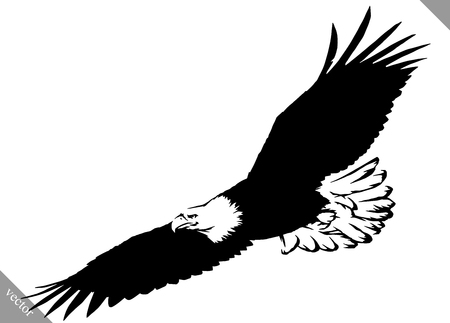 eagle: black and white linear paint draw eagle bird vector illustration Illustration